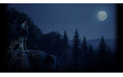 A Night Howl