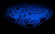 Doomsurf - Starry Blue Night