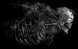 Juggernaut Anatomy